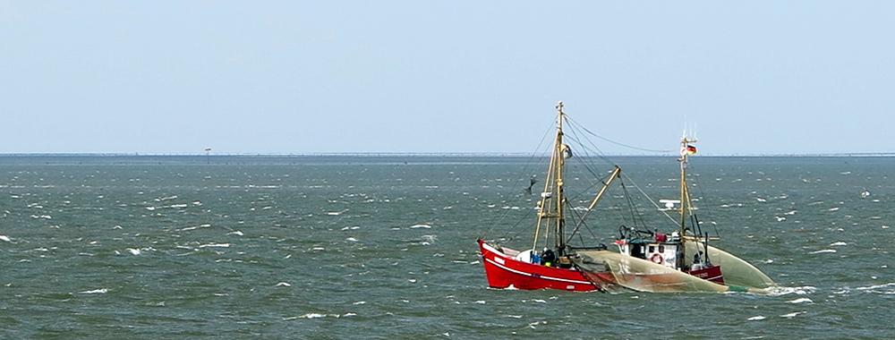 Header Fischerei KW